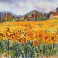Field of sunflowers (1024x695)